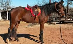 Dont miss out on the gorgeous 2011 AHA Mare! Sweet has a far more mild temperament than the average Arab! She is trained to ride both English and Western. Sweet is a great show prospect for an intermediate level rider and oh so SWEET!! Reason for