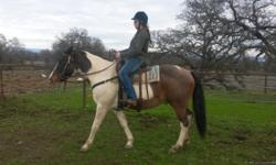 Zip is 15 hands he is green broke he loves water and stands while tied. He has been on trails and does real well needs more time. We are still riding him now. Could be a good roper and all around horse he must go to a good home