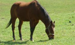 Hillside Stable has a couple openings for your senior equine family member. We offer daily stall cleaning, feed, hay, turnout. The horses are in during the day and out overnight for the summer months and out during the day and in all night from Oct - May.