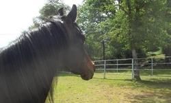 A lifetime of experience is yours when you and your horse come to Heart's Content Ranch! We offer 24 hourprofessional care, reasonable rates, tree shaded pastures with seasonal creek, no barb wire, stalls with daily turnout, top quality hay