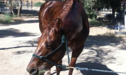 Beautyful Quarter mile cutting horse for sale. She is 5years old. Asking price1,500 OBO