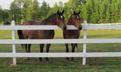 Two quarter horses for sale. $500 each. Not registered, but good blood lines. Will provide boarding at very favorable rate - feeding, daily grooming, shots, farrier care, etc. 400 acres of riding trails. For further details,