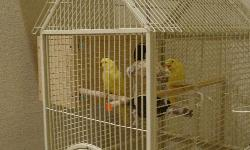 1 year old male and female parrots needs a new home. They are very friendly and starting to talk. Yellow in color and they are very beautiful.