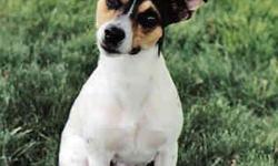 i have a year an a half old female jack russell terrier named roxy that has been sp./nue. she is very playful an very good with other animals. she comes with collar an a leash an a toy. she is house trained an almost completely crate trained. she has had