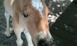 KIDDIE TOWN PARTY PONIES & PETTING ZOO    MAIN BOOKING # 772-353-8308 E-MAIL: www.kiddietownpartyponies.com WE DO ALL KIND OF EVENTS,BIRTHDAY'S,DAY CARES, CHURCHES, HOLIDAYS, NURSING HOMES, PRIVATES SCHOOLS CALL