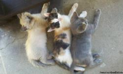 3 loving one month old kittens need a home. 2 female, 1 male.Call (323) 268-0502