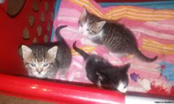 3 beautiful kittens in West Fort Worth are seeking froever homes. All eating solid kitten food and using litter box. I am available to call @ 817-404--3143 or email calhoon.melissa@yahoo.com.  They are available for pick-up after 4:30pm Mon-Frid and