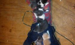 In need of immediate homes now. Lovely kitten but I'm in desperate need of money. Can't afford to care for them anymore sadly, people cat food for me no longer can. I'd love for them to find lovely homes ( caring families). Theres 5 kittens all born on