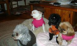 Little Paws Doggie Care is located down a secluded road on beautiful Scott Lake in Waterford, Michigan. (Scott Lk.Rd & Dixie Hwy)We area home-based, cage free pet care provider. Twenty years of experience dog sitting.Aclean,