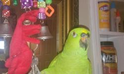 Kumar is a very friendly six-year-old yellow fronted Amazon he is a very sweet boy he steps up on command and I miss him dearly please call 616-308-2818 if you find him. He went missing on Thursday May 5th 2016 around 7 p.m near the Loggerhead Marina