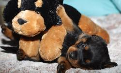 cute rottweiler puppies looking for a loving and caring family that can take good care of them.they are akc registered and comes with all health papers. so if interested,contact me for more details and pictures.