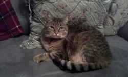 Belle has been spade and declawed and is very loving. I can no longer keep her due to allergies. She has beautiful tiger grey blackfeatures with racoon looking tail. Comes with all necessities to maintain a happy cat.