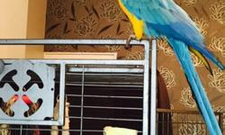 Beautiful and talking Hahns Macaw parrots for a new home. Vet checked and micro chipped. Health and medical certificates from our vet. They whistle, sing and respond to voice commands.(daniellabecky2015@gmail.com)