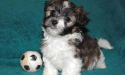 Hi my name is Finnick! I am very well behaved, I love to cuddle, give kisses, play, and explore. I am very energetic and like playing with my soccer ball. My family says I'm very smart, I was even the first one in my litter to be potty trained. I love