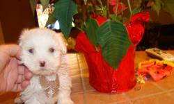 Adorable ,up to date on puppy shots an deworming,Maltese do not shed so are good for people with allergies, They are 8 weeks old and ready for a home, i have 3 girls, 1 boy, parents weight 4 pounds, please call me at.,