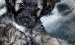 I have 1 male maltese and poodle mix puppy, born on 03/01/14 that's in need of a loving home. He is mostly all black with a mixture of tan and white. He will come with all of his first shots. He's also pad trained. He is very friendly and loves to play.