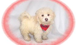 This baby boy is frisky! He is crazy playful and loves to have fun. He would love a new family with children to play with. He is hypo allergenic and has a beautiful non shedding hair coat.He is micro chipped. He comes with his first series of shots,