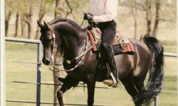 Do you need a vacation? Do you need a horse sitter? Do you need someone dependable, honest and trustworthy? Call us, take your vacation and relax. 25+ years of experience with horses and dogs. References upon request. --