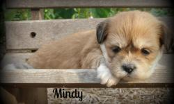 Mindy is an adorable AKC registered Lhasa Apso female!! She was born on July 25, 2014. Mindy is mostly brown with patches of white...check her out on her pics. ........she is beautiful!! You may contact us at: 478-954-1796 or 478-244-9846 for more