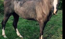 A Great Horse for a great family; 8yr Blue Rome Tennessee Walker gelding,I also have horse tack and trailer for sale. If interested please call 318-228-4288
