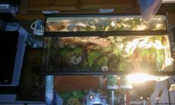Have a 4 foot bearded dragon with all exseries heat rock heat light food has new sand 2 cages one for out side. Have A lot invested. Temp gaeged food2 bowls eveveything you need