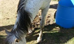 It nice horse but need to gite broken to ride she is a tame horse