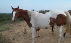 8 year old paint mare. Bred once...one live foal. Broke to ride. Great trail horse. unregistered.