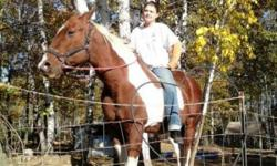 Gelding paint quarter horse. I love my sweet Andy, but circumstances out of my control is forcing me to sell him. Andy is dead broke, rides double, loves to canter, can slide off his rear, I've never had a problem with him he's very gentle. Andy gets