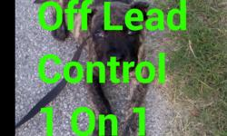 this is called dog control obedience on and off from puppies 2 adults that have a developed Focus if you're looking for professional dog training and you came to the right place big or small we train them all starting at 8 weeks of age