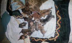 I have pitbull puppies for sale. Boys 100 girls 150. If interested please contact me serious inquiries only please