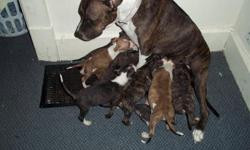 they r red noise pits and really cute.4 more info u can contact me