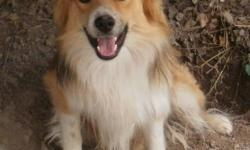 Darling year-old male, well-behaved, very friendly and cute. Will make a good companion. Has all shots.
