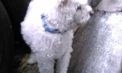 Male, 12 months, dewormed monthly, get along with kids and other dogs, not a barker, housetrained. Text for more info.