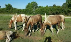 I have 12 yearlings for sale, most buckskin paints. Beautiful, first come first served. Call David 832-445-9724.