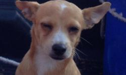 $$$ REWARD$$$ $200.00 PLEASE HELP ME!!! HELP ME FIND MY DOG HER NAME IS PRINCESS SHE IS A CHIHUAHUA MIX COLOR TAN WITH WHITE ON HER CHEST AND HEAD AND IN THE END OF HER TAIL LAST SEEN ON ~ELYSIAN PARK ~ ON 10-05-12 CELL --