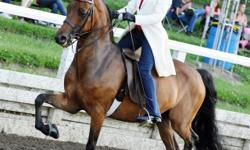 CH Elegant Equines, Ltd. is a premier equestrian facility specializing in Saddle Seat Riding. We offer packages for boarding, training and riding lessons. Please visit our website at www.elegantequinesltd.com or call Carolyn @ 330-304-7535 for