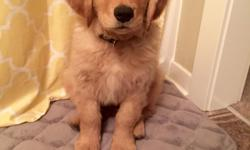 Hello, I am a 22 year old female moving to Asheville from Michigan State Universityfor a job as a registered nurse. I am in search ofanother professionalmy age looking for a roommate starting July 2016. I do have a golden retriever puppy