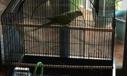 9 inch Rescued Rose Ringed Parakeet. will never fly, wing dislocated. Quite bird. with cage $125 if no cage needed,$25