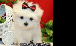 You will love our puppies. Our adorable toy and teacup Maltese puppies are 8 to12weeksold and ready to join your family. All of our puppies are registered andall vaccinesare up to date and the price starts at