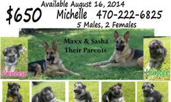 I have 7 German Shepherd Pups (5males, 2 females) that will be ready for new homes after August 15, 2014. They have been dewormed at 2 weeks, and will be dewormed again and first round of shots at 6 weeks (aug. 15). AKC registered. Both