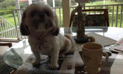Female, spayed Shih-Tzu for sale. 5 years old. Moving, must sell.