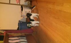 16 months old ,good dog. 5023811933