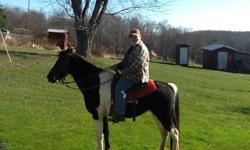 FOR SALE TENNESSEE WALK BLACK AND WHITE. RIDES TRAILS HE IS 10 YEARS OLD HE IS A GAILED HORSE WELL BEHAVED GIVE A LITTLE TROUBLE TO GET ON AT TIME BUT OTHER THAN THAT HE IS GOOD .