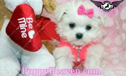 Tiny Teacup & Toy Yorkie (Yorkshire Terrier), Pomeranian, Maltese, Poodle, Shih-Tzu, Yorkipoo (Yorkie & Poodle), Maltipoo (Maltese & Poodle), Morkie (Maltese & Yorkie), Malshi (Maltese & Shih-Tzu, and more... Visit our