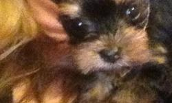 I have a tiny girl 6 weeks can put a deposit but can't let her go till she's 12 weeks old. She's a doll babydoll face with a attitude . She is sold to loving pet home only no small children . 225 9374654