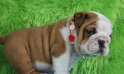 Dear Buyers and interested pet lovers,text me at # (770) 467-2945 . I do have pure breed of English Bulldog Puppies,i have three cute English bulldog puppies available now and they are ready to go to their new homes. Please contact if interested in buying