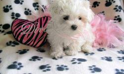 Male and female Maltese puppies available. Expected weights range from 4-5lb, Shots & worming are all up to date... potty trained and began crate training... Weaned off parents and ready for new home.
