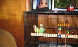 Two lovely Love birds Yellow&Green Female Yellow and Male is Green cage and food comes with the price of 50.00 moving and cant keep. Please call 678-977-4964