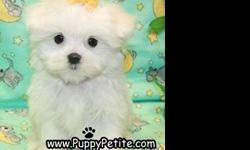 You will love our Maltese puppies. We have toy and teacup puppies that are 8 to12weeksold and they are the perfect family pet. They are adorable and the price starts at $500. All of our puppies are registered andall