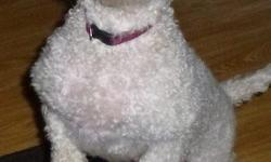 I am looking for a home for a 1 year old poodle she was taken from a breeder. She is very playful. Fully potty trained. She gets along with cats, dogs and children. She would be purfect for a family. she is spay, up to date